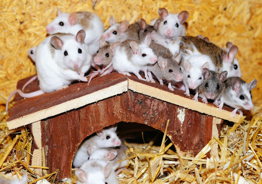 Ratones en falso techo